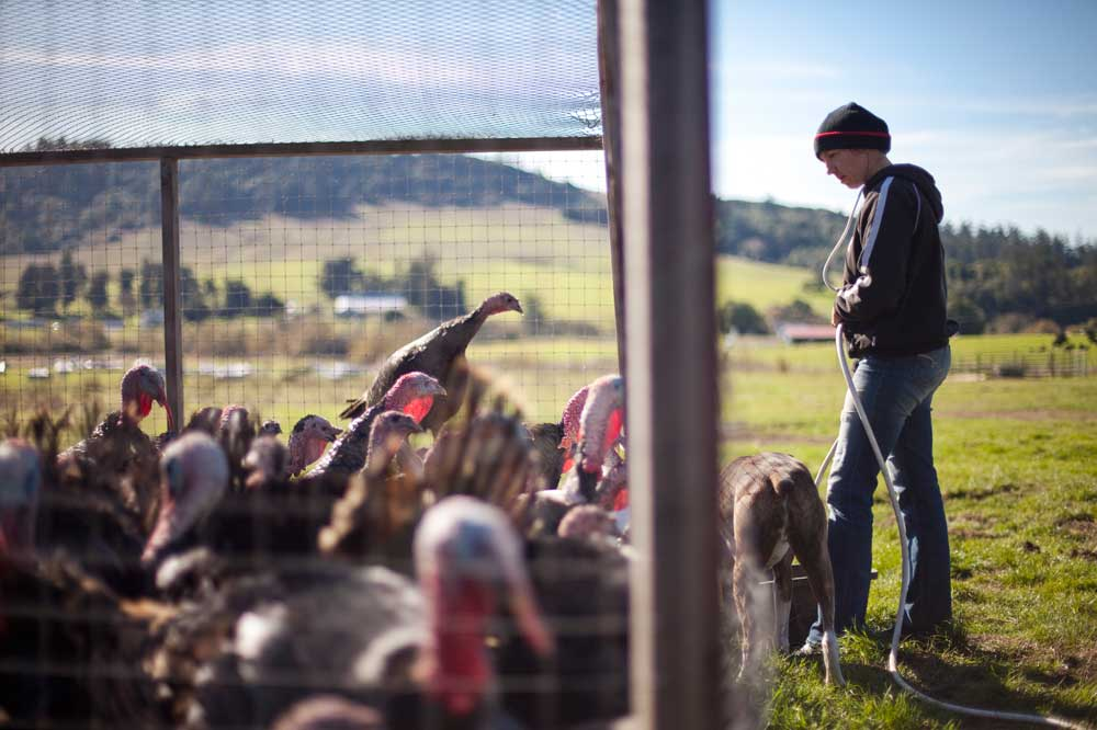 1000 families project nancy preblichs fight to save the family farm feeding animals